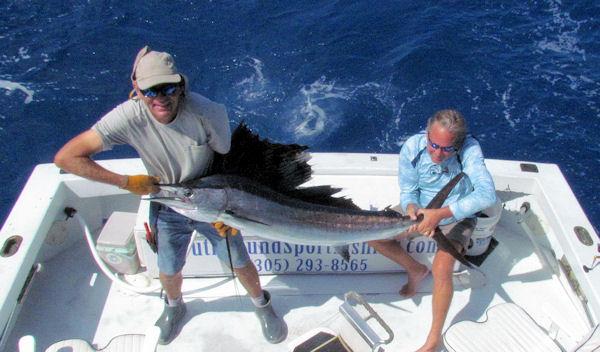 sailfish released April 14